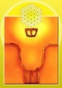 KAN.Yellow Seed