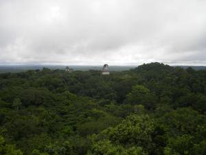 Tikal.11