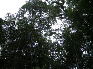 Tikal.15