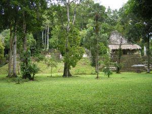 Tikal.17