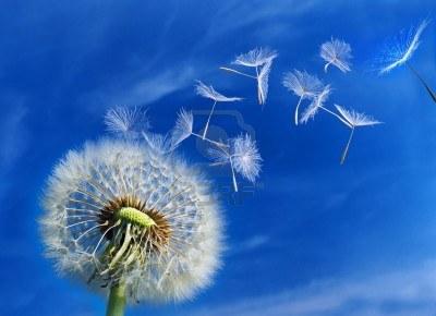 White Cosmic Wind