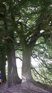 Avebury.Sacred Tree.June 18