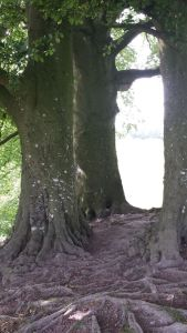 Aveybury.Sacred Tree.what is its message.June 18