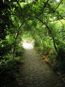 Chalice Wells.Sacred Pathway.June 17