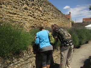 Gay Anne Liberty and Stuart at the Lavender.Glastonbury Abbey.June 16