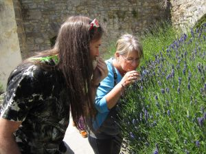 Glastonbury Abbey Lavender.Stuart and Gay.June 16