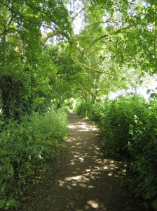 Magical pathway during the New Moon.towards the foothills of the Tor.June 16
