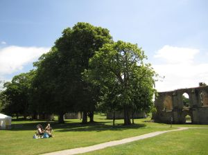 Sacred Trees at the Glastonbury Abbey.June 16