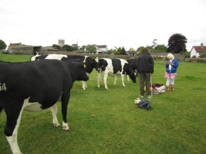 Stanton Drew STone Circle.Stuart.Carla and the Cows.Sunday.June 14
