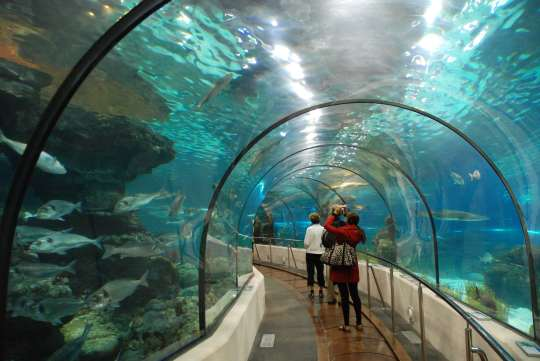 aquarium-society-min