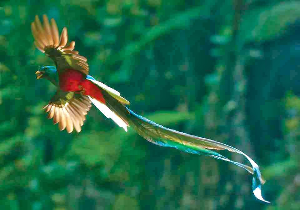 01-quetzal-by-thor-lft