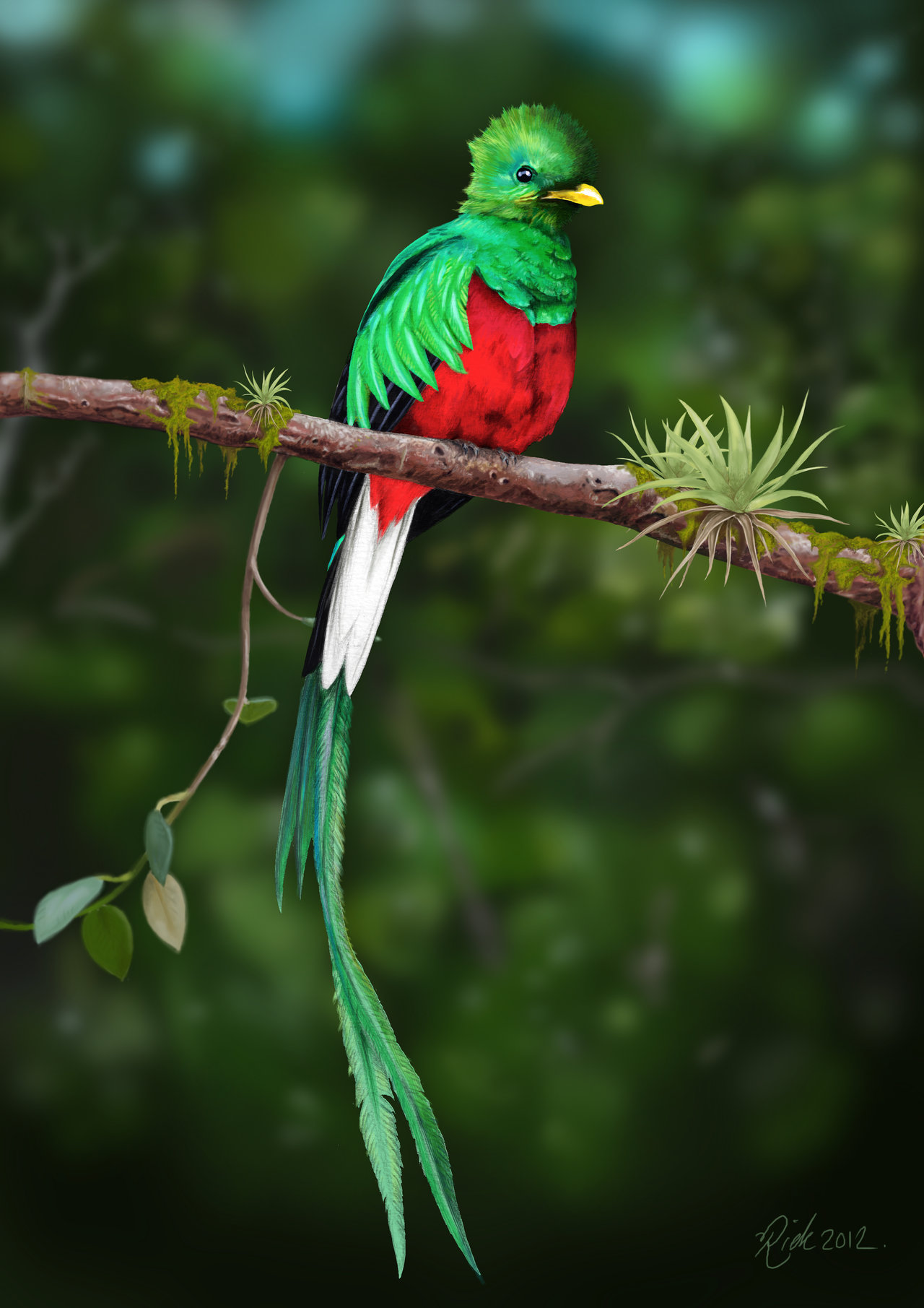 wpid-quetzal-bird-hd-wallpaper-animals-images-quetzal-bird-hd-wallpaper