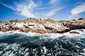 Ballestas Island.1
