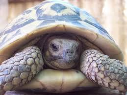 Turtle.4