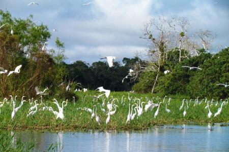 Amazon cruise egrets