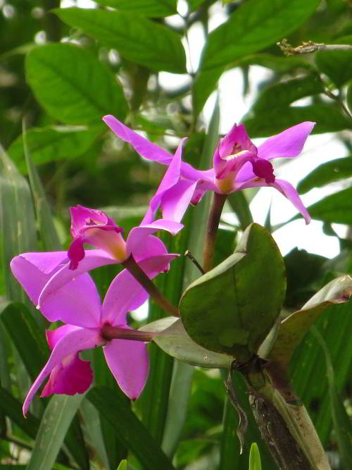 amazon_jungel_beautiful_orchids2_small