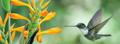 ecuador-andes-amazon-photos-hummingbird