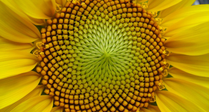 context_sunflower