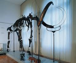 Slovenian Museum of Natural History.Ljubljana